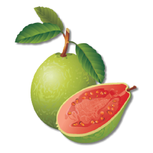 red guava 1