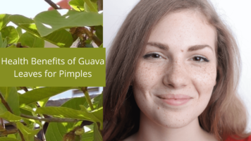 Health benefits of guava leaves for pimples (2)