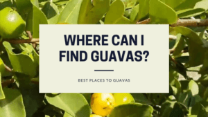 Where Can I Find Guavas?: Best Places To Buy Guava