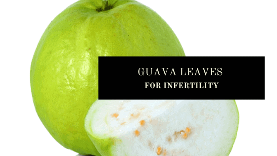 guava leaves for male and female fertiilty