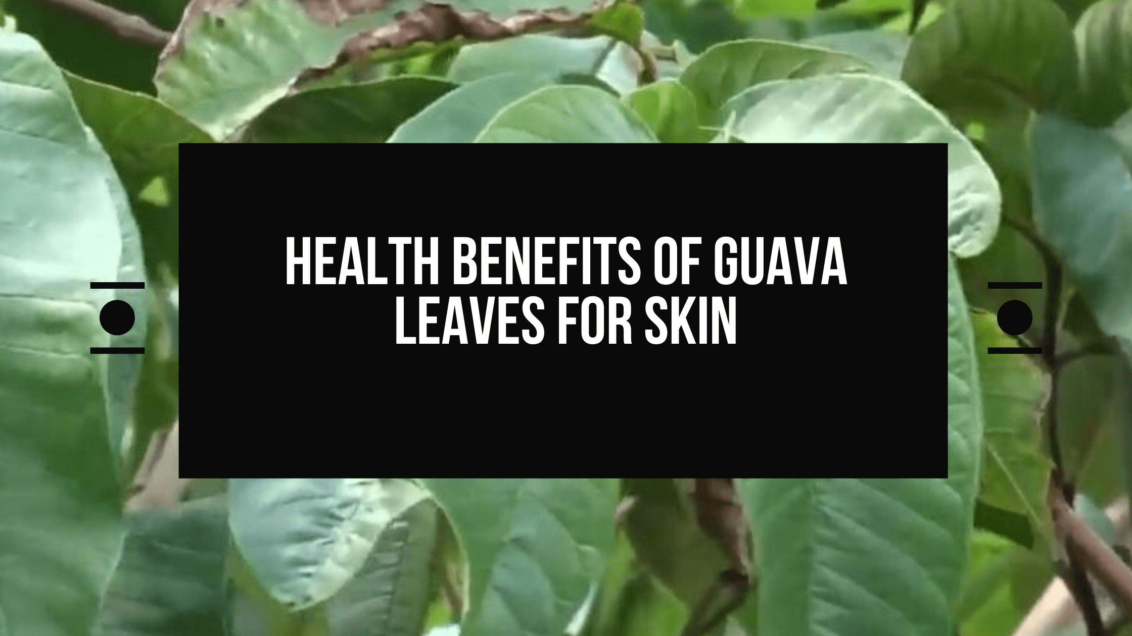 health benefits of guava leaves for skin