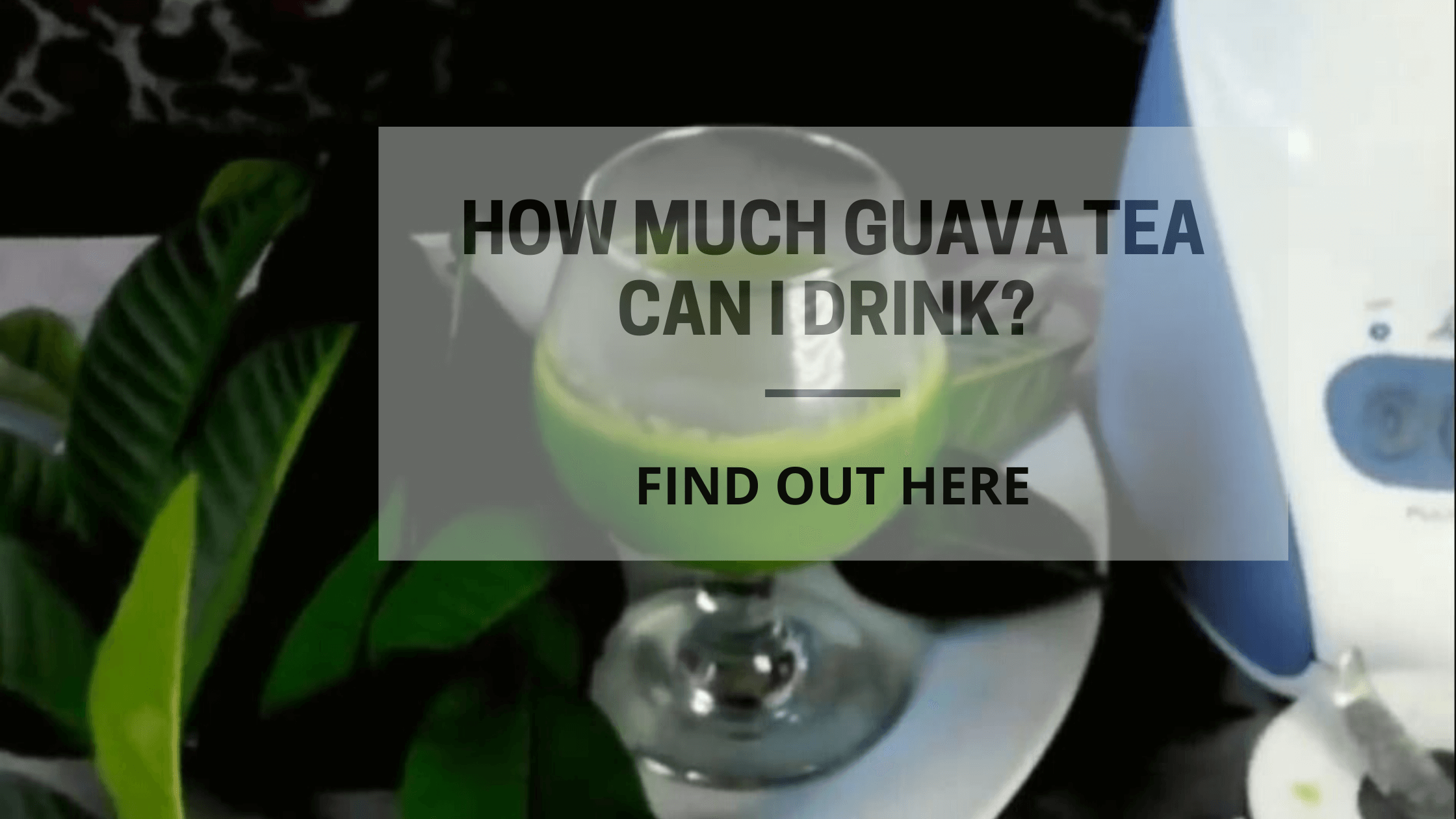 How much guava tea can i drink (1)