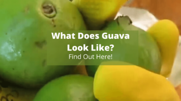 What Does Guava look Like