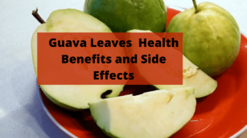 guava leaves benefits and side effects (1)