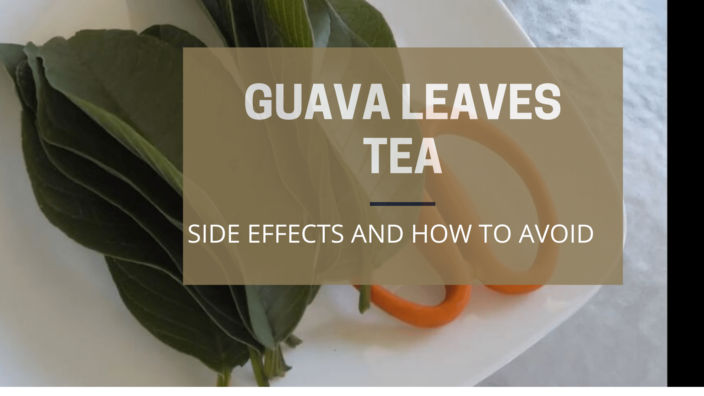 guava leaves tea side effects (1)