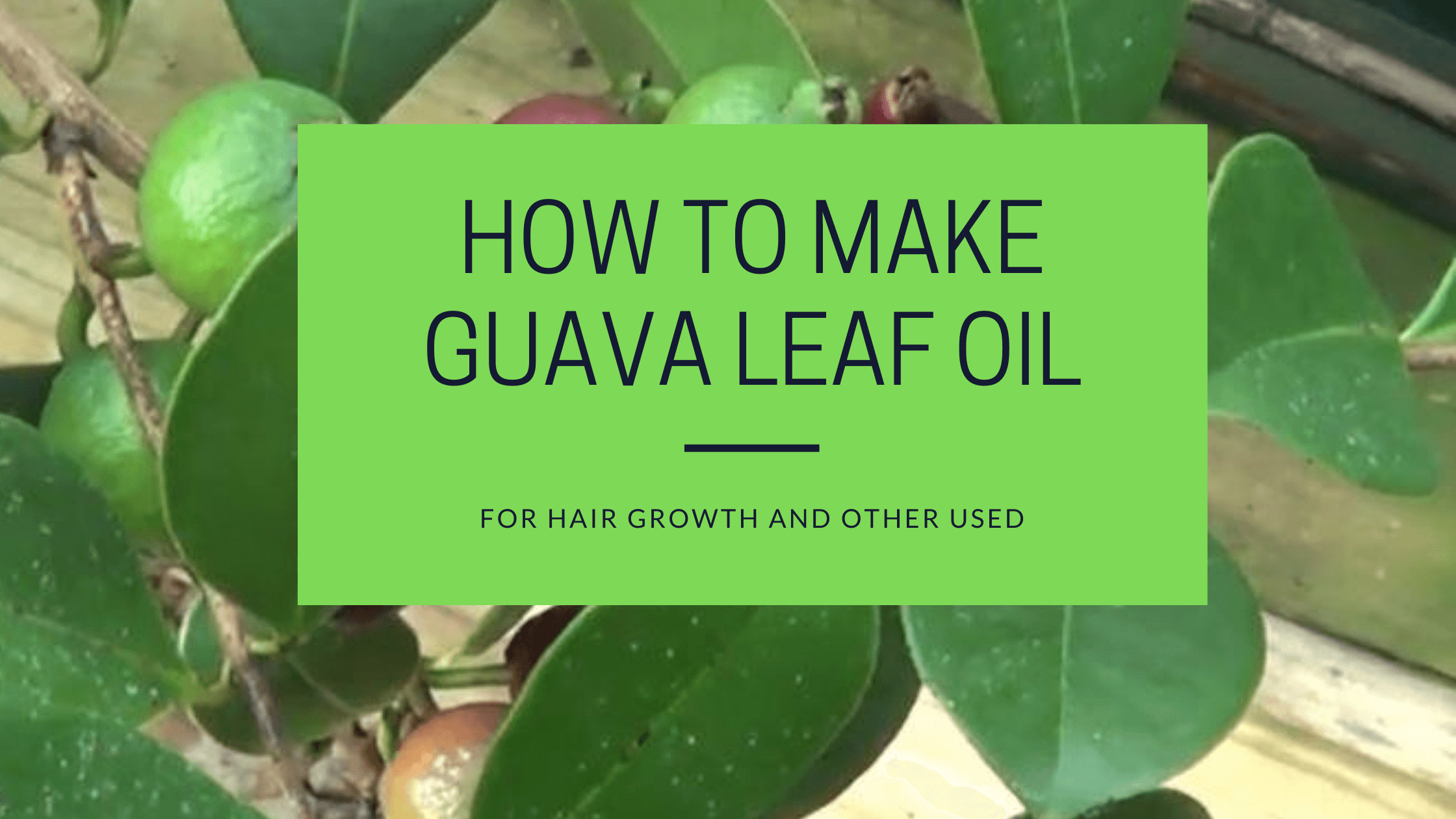 how to make guava leaf oil