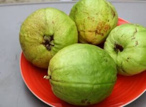 Similarities And Difference Between Guava And Mango